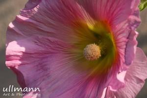 Flowers ullmann a&p (11)