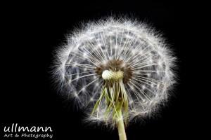Flowers ullmann a&p (14)