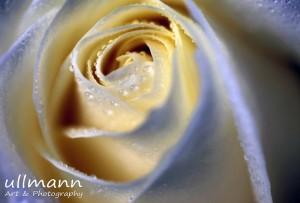 Flowers ullmann a&p (17)