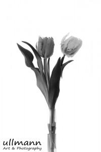 Flowers ullmann a&p (22)