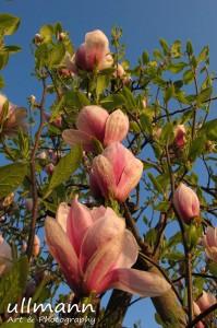 Flowers ullmann a&p (6)