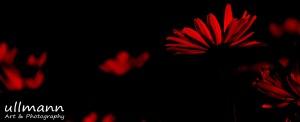 Flowers ullmann a&p (7)