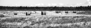 Landscape uA&P (4)